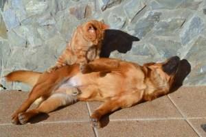 Cat Massaging Dog