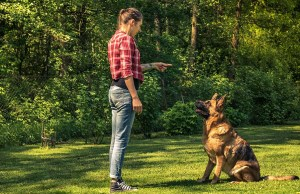 Dog Behaviorist vs Dog Trainer - Which One Is Right for You