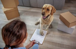 7 Pet Care Financing Organizations to Try
