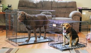 Best Dog Crates for Training