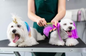 Dog Fur Dye - What You Must Know About It