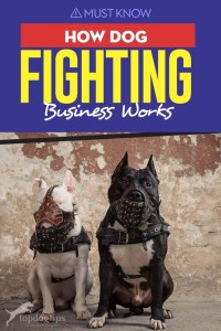 How Dog Fighting Business Works