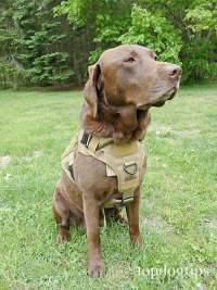 Rabbitgoo Tactical Dog Harness