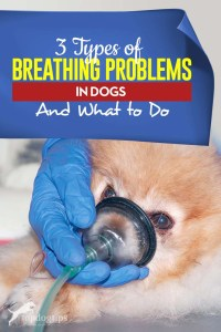 The 3 Types of Dog Breathing Problems and What to Do