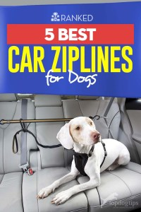 Top 5 Best Car Ziplines for Dogs