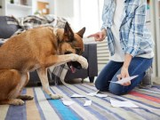 5 Things Owners Wish They Knew Before Adopting a Dog