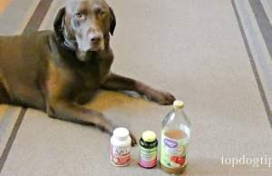 Dog UTI Home Remedy