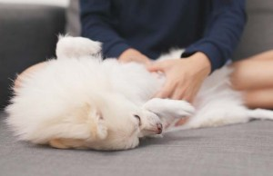 How to Massage Gas Out of a Dog
