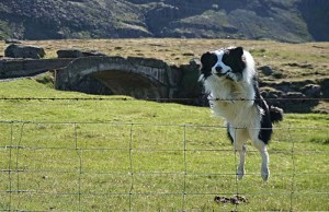 The Best Dog Fence Jumping Prevention