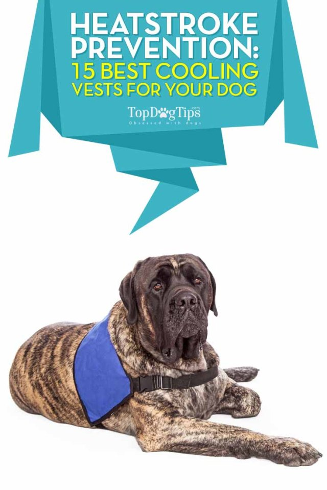 Top 15 Rated Best Cooling Vests for Dogs