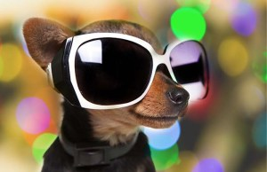 9 Most Stylish Sunglasses for Dogs to Try Right Now