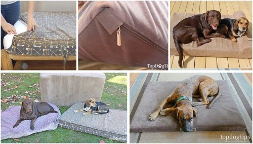 What Style/Color Dog Bed Will Match Your Home's Decor?
