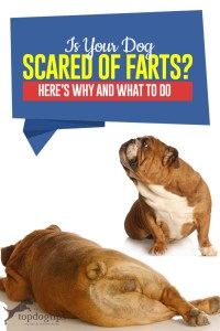 Is Your Dog Scared of Farts - Why and What to Do