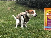 Metamucil for Dogs - Its Uses, Benefits and Side Effects
