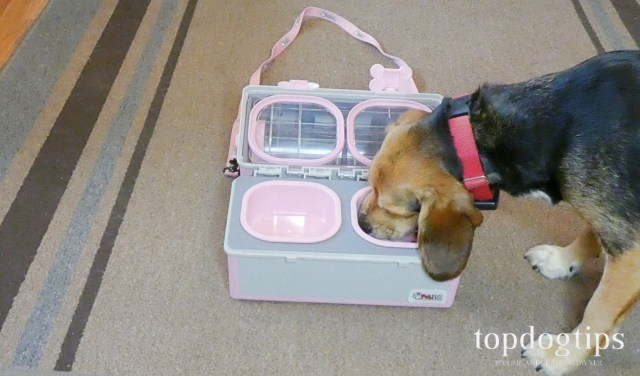 dog travel feeder