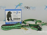 Puppy Potty Training Prize Pack