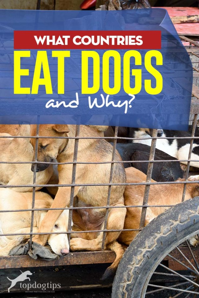 What Countries Eat Dogs and Why