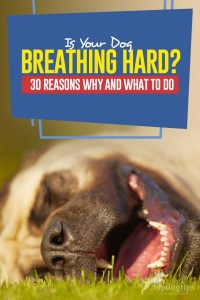 Your Dog Dog Breathing Hard - 30 Reasons Why and What to Do