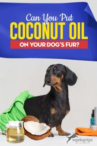 Can I Put Coconut Oil on My Dog's Fur - What to Know