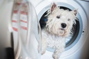 Differences Between Whitening Dog Shampoos