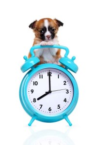 Dog's Perception of Time