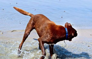Fly Bites on Dogs - Prevention, Signs and Treatments