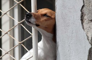 How to Prevent Dogs from Escaping the Yard