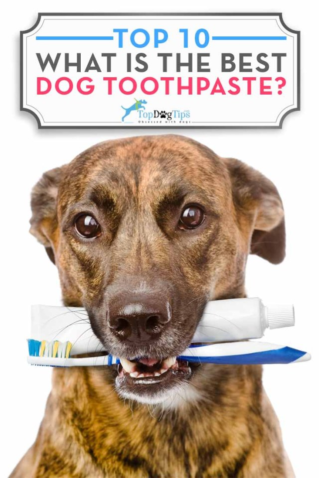 My Top 10 Favorite Dog Toothpaste Brands