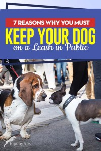 The 7 Reasons Why You Must Keep Your Dog on a Leash in Public