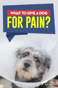 Tips on What to Give a Dog for Pain