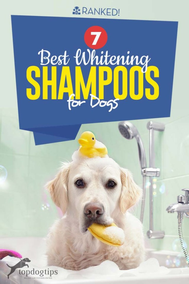 Top 7 Best Whitening Shampoos for Dogs