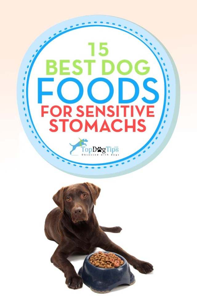 Top Rated Sensitive Stomach Dog Foods