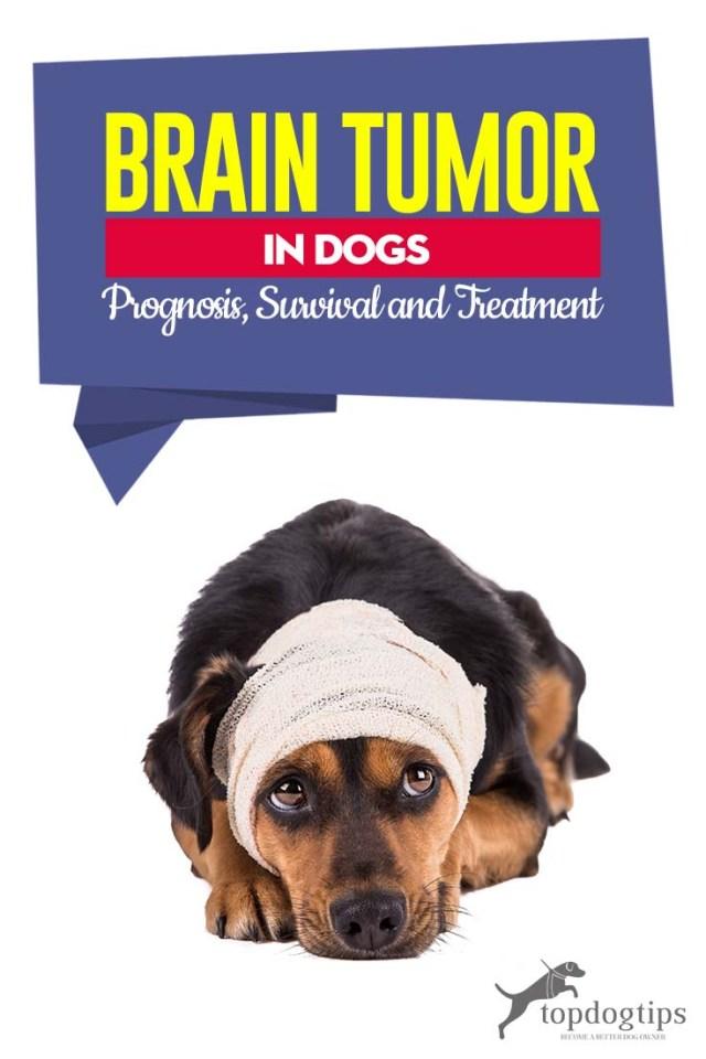 Brain Tumor in Dogs - Prognosis, Survival, and Treatment