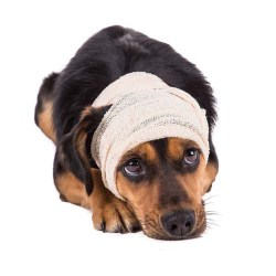 Conclusion on brain tumors in dogs