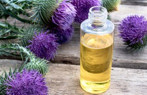 Milk Thistle for Dogs - Uses, Benefits and Side Effects