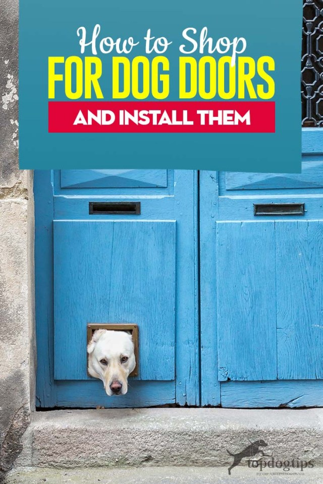 Tips on How to Shop for Dog Doors