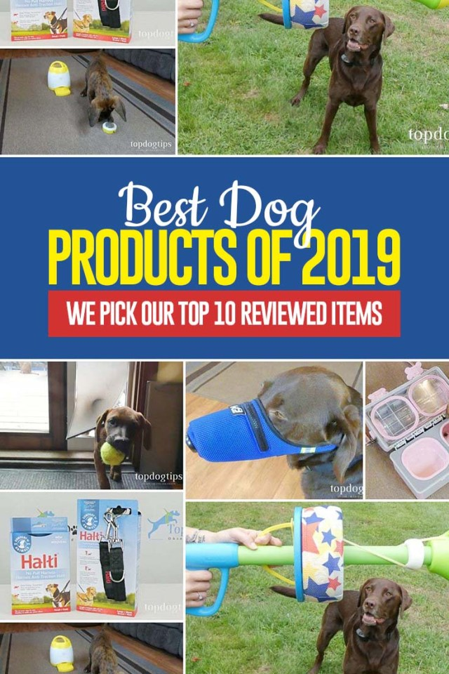 Top Best Dog Products of 2019 - Our Top 10 Favorite Items