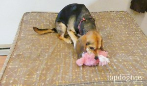 dog chewing plush toy