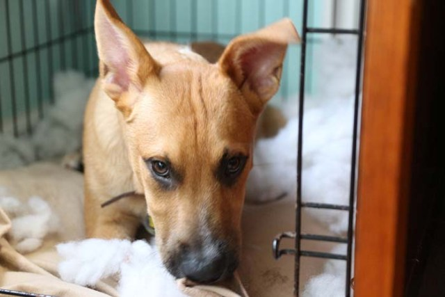 4 Ways to Fix Anxiety Induced Dog Bed Chewing