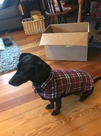 Dog Jacket for Winter (Windproof, Waterproof) by MIGOHI