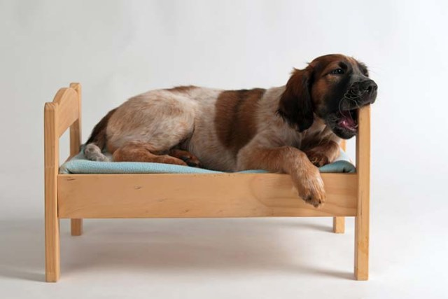 6 Ways to Fix Boredom Induced Dog Bed Chewing