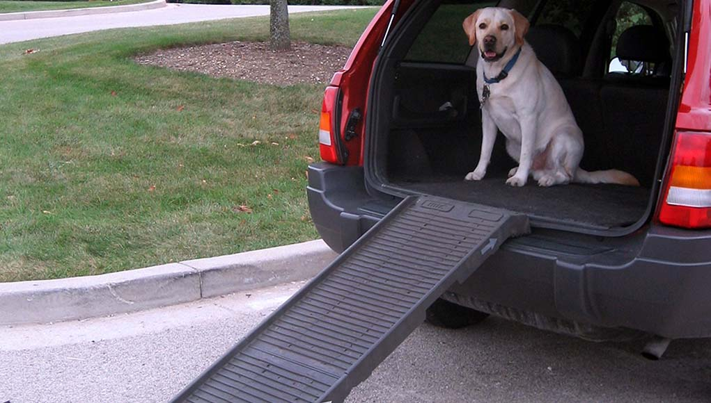 Best Dog Ramps for Cars