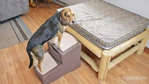 Pet Gear Dog Stairs Review