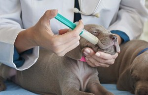 Syringe Feeding a Dog - Pros vs Cons (And How to Syringe Feed Your Pet)