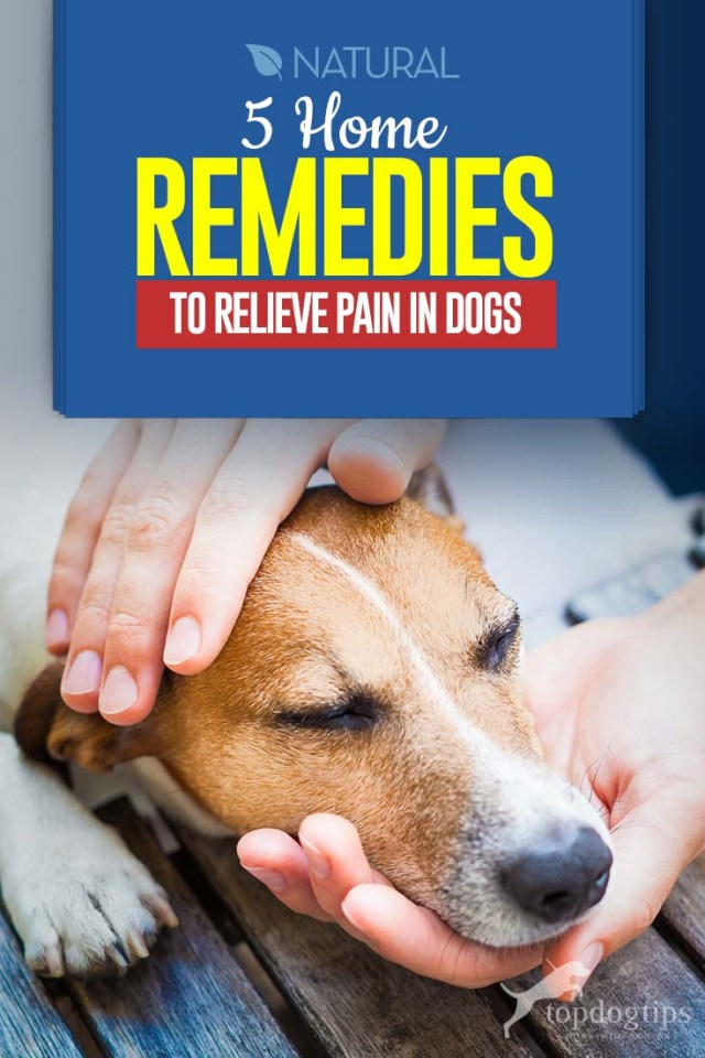 Top 5 Dog Pain Relief Home Remedies