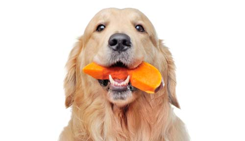 How Do I Firm Up My Dog's Stool Through Diet