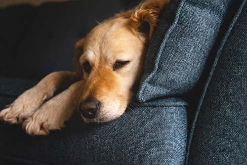 Keep Your Dog Stress-Free