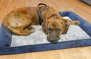 Rabbitgoo orthopedic foam dog bed