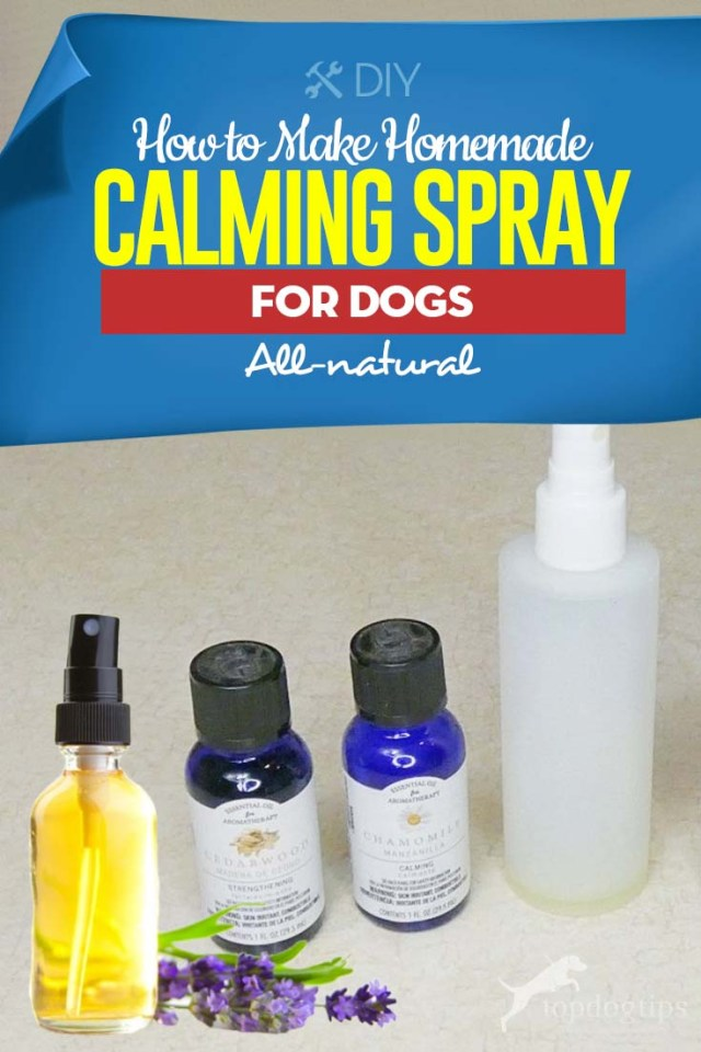 Tips on How to Make Homemade Calming Spray for Dogs