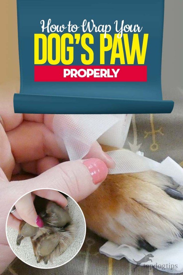 Tips on How to Wrap a Dog's Paw Properly